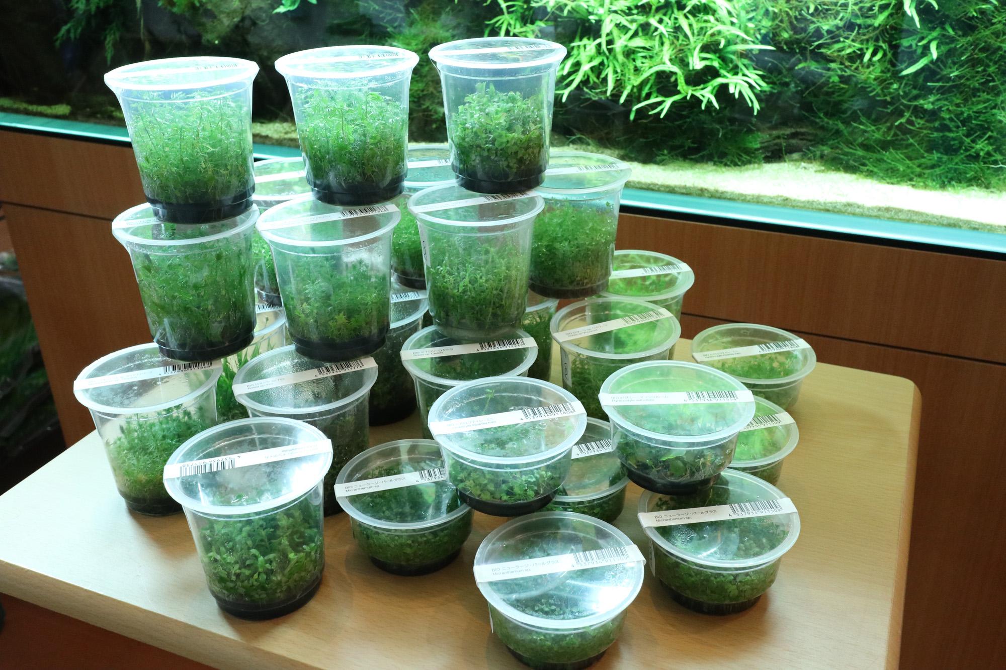 ADA組織培養水草「BIO水草の森」が大量入荷しました!