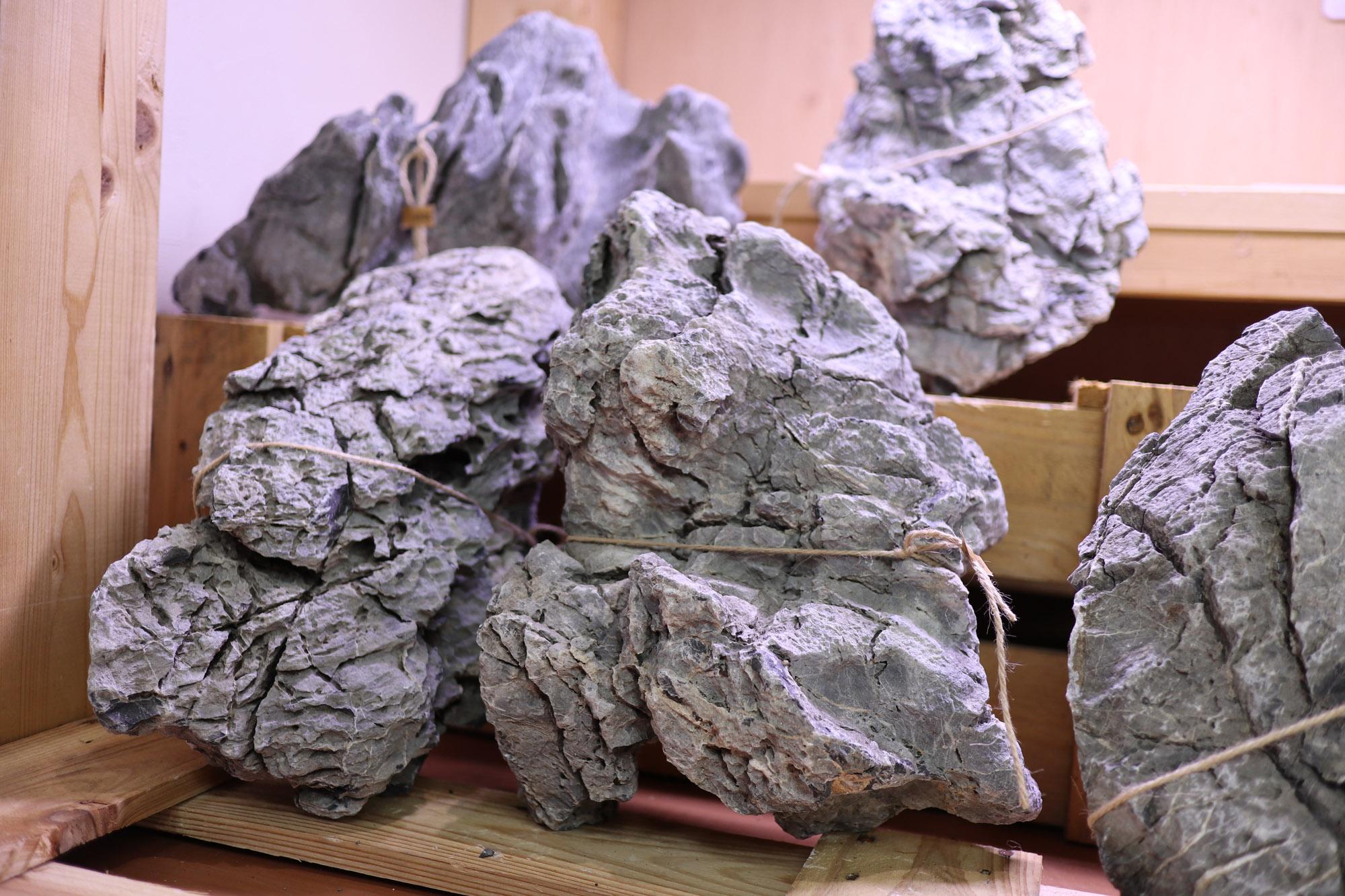 ADA龍王石 特寸サイズ数量限定入荷