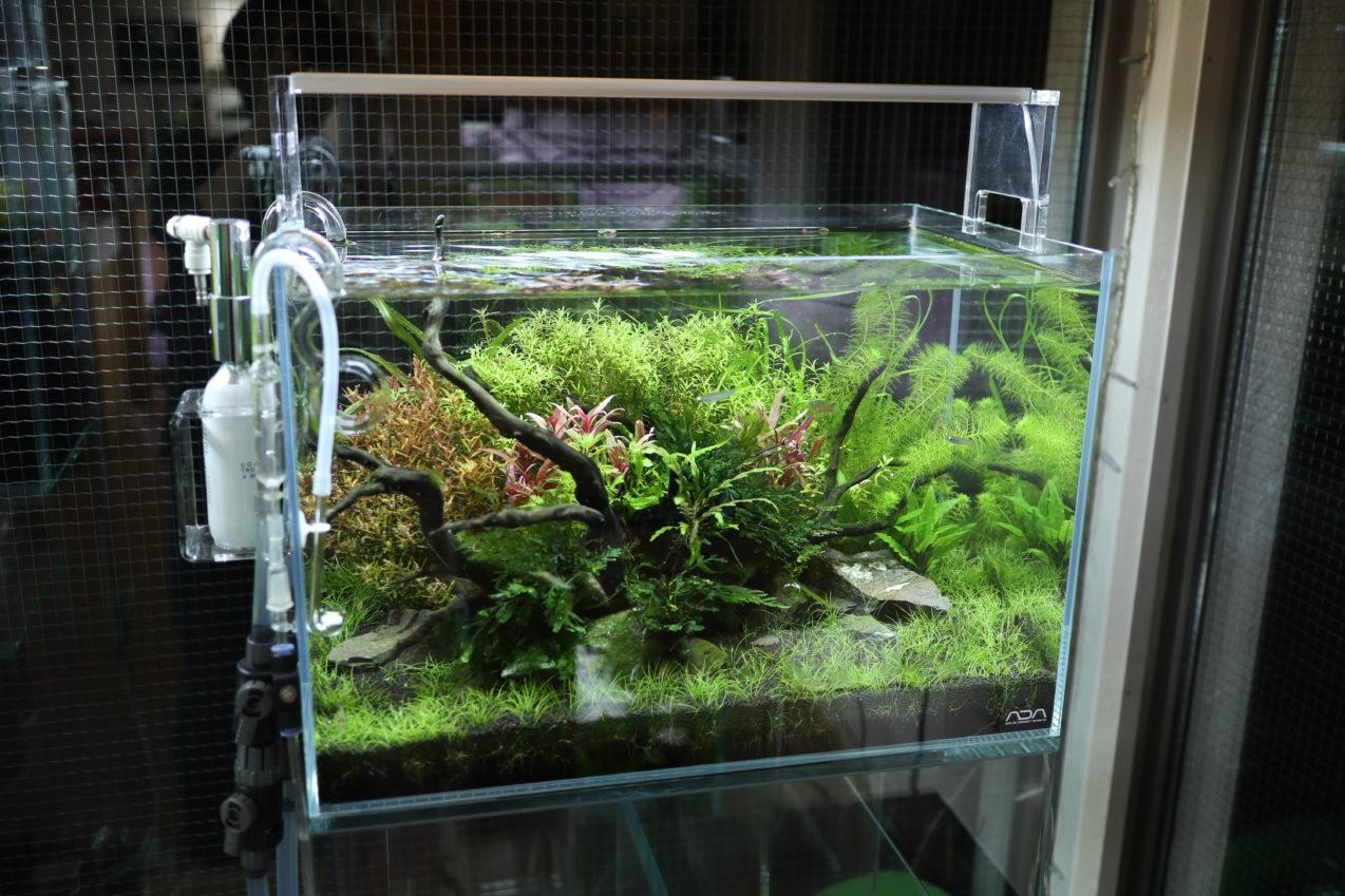 36cm 水草ネイチャーアクアリム水槽