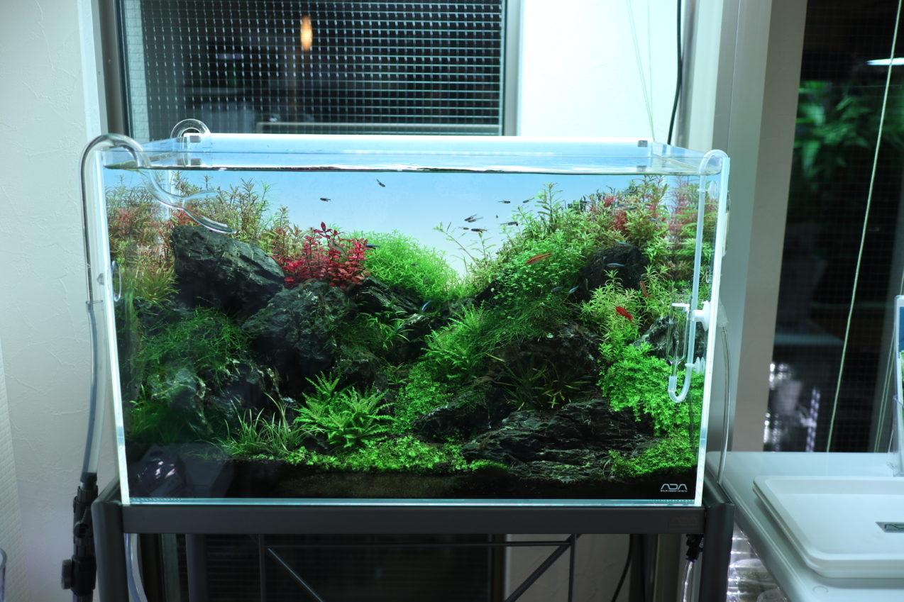 60cm 水草ネイチャーアクアリム水槽