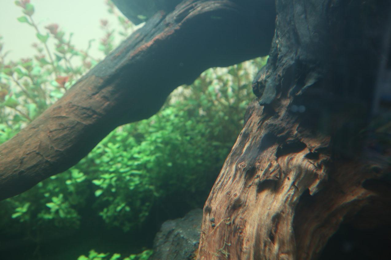 120cm 水草ネイチャーアクアリム水槽