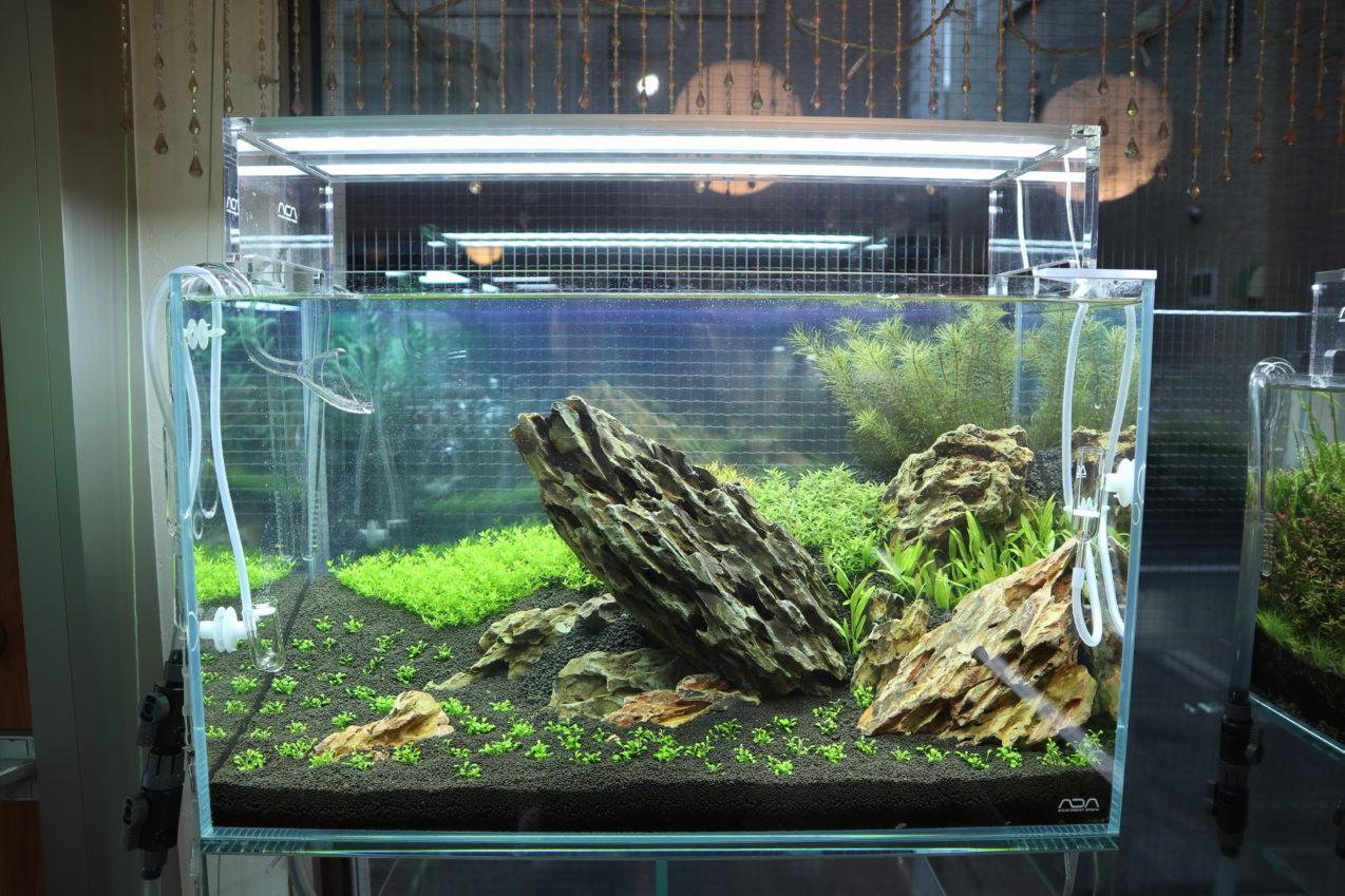 60cm水槽 水草ネイチャーアクアリム水槽