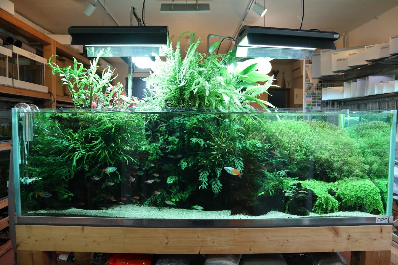 150cm水槽 水草ネイチャーアクアリム水槽