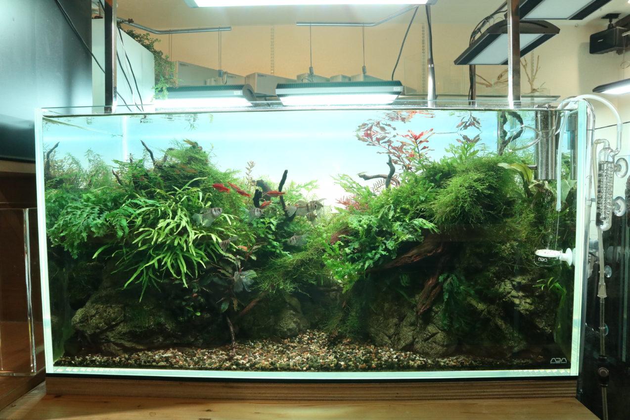 90cm 水草ネイチャーアクアリム水槽